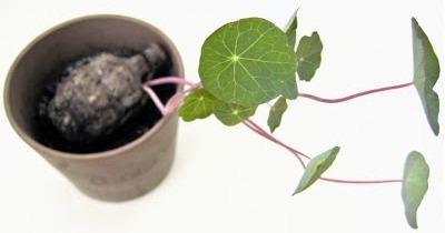 seed-bom_bombe-semi_guerrilla-gardening-2