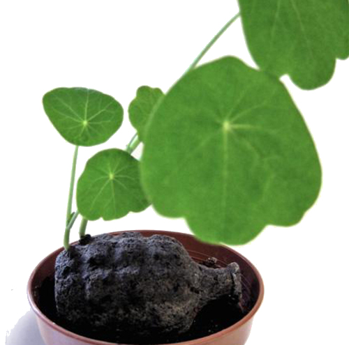 seed-bom_bombe-semi_guerrilla-gardening-3