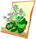 libro_fiori