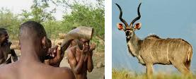 Dal Sudafrica le Vuvuzelas ecologiche
