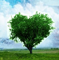 albero_cuore