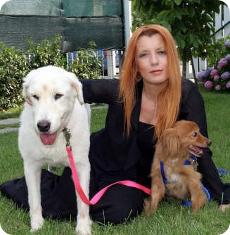 Michele Brambilla e i cani