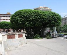 Partecipazione Sardegna - Cagliari - Piazza Garibaldi