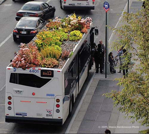 bus_roots_1