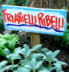 friarielli-ribelli-mini