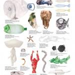 <b>L'uomo è più pericoloso degli squali.</b> Ecco come abbiamo inquinato il Mediterraneo