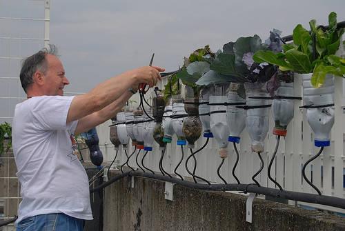 God save the green il documentario con le storie di verde for Giardini pensili