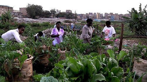 giardini-sacchi-nairobi