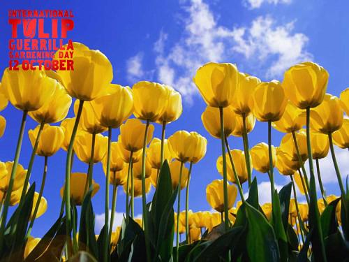 International Tulip Guerrilla Gardening Day