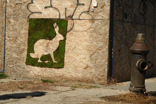 moss_rabbit-brooklyn-2009